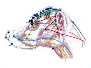 dogacupuncture1